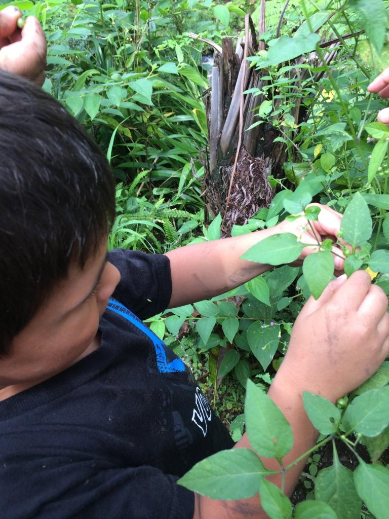 """Popolo"" - blackberries were sour but good :)"