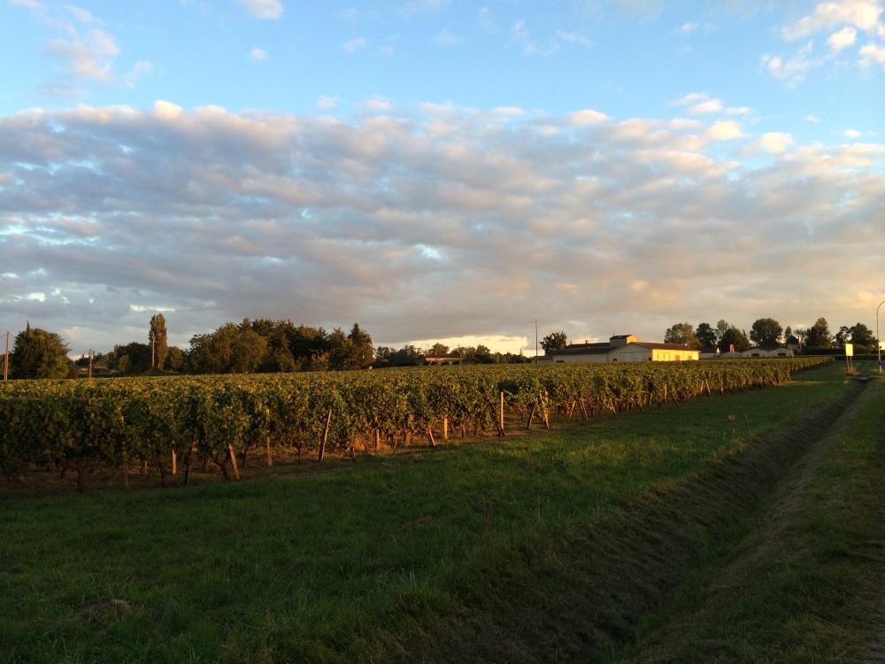 The vineyards were incredible during sunset